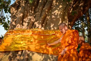 A Thai monk in Sravasti pays respects at a sacred banyan tree, a symbol of Buddhism.
