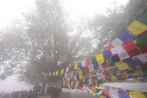 Tibetan prayer flags attached to a holy banyan tree in Lumbini Gardens.