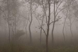 Early morning in a forest near Lumbini.