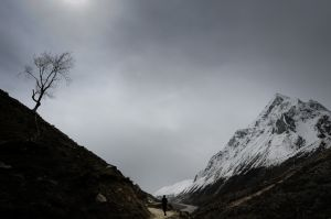 The pilgrim trail to the Gaumukh Glacier, the source of the Ganges River.
