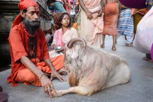 A Tantrika sits with the sacrificial goat he has brought as an offering to the goddess.