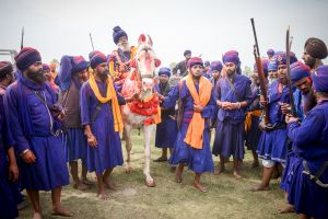 Nihangs in a procession during a festival. The Nihangs, or Sikh soldier saints, constitute the remnants of spiritual armies that once defended the Sikh nation from religious persecution, especially by the Mughals and Afghans.